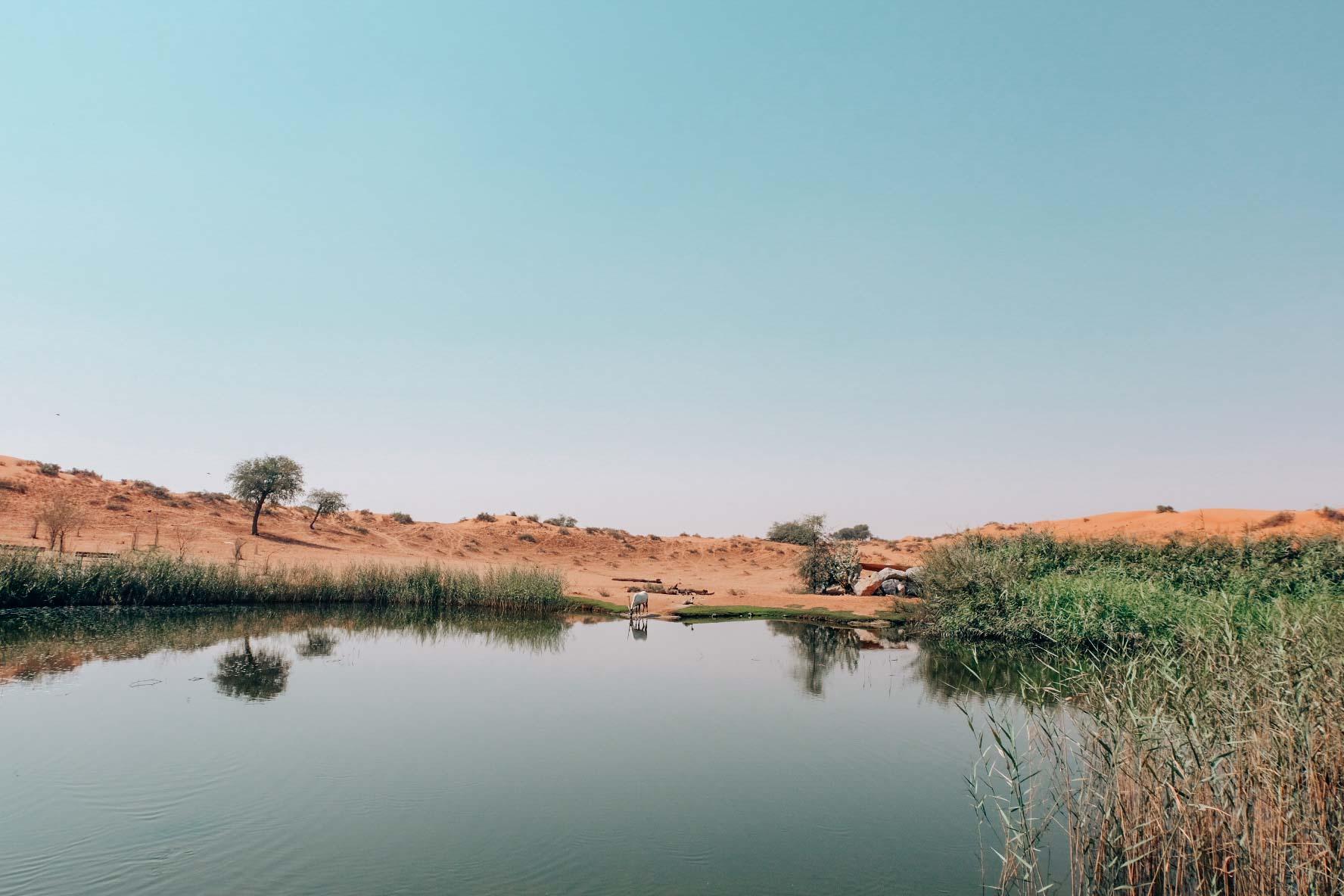Ras Al Khaimah hotel al Wadi Wild Oryx