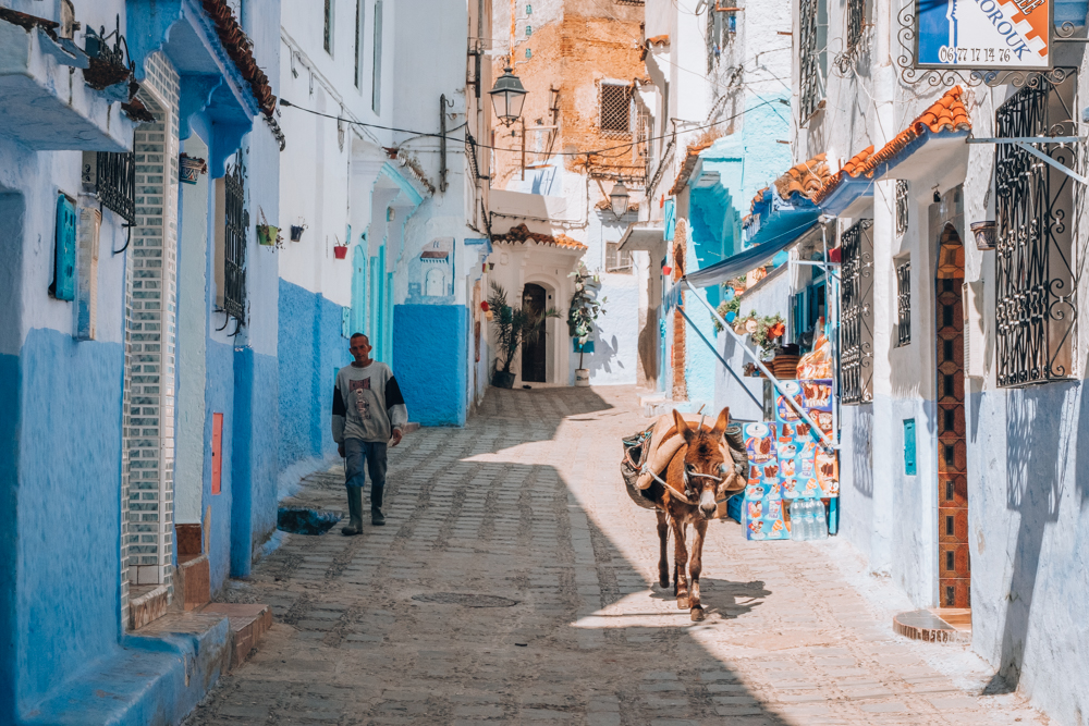 Chefchaouen blue streets donkey