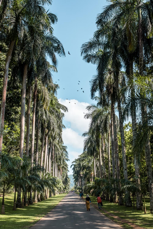 Peradeniya Botanic Gardens