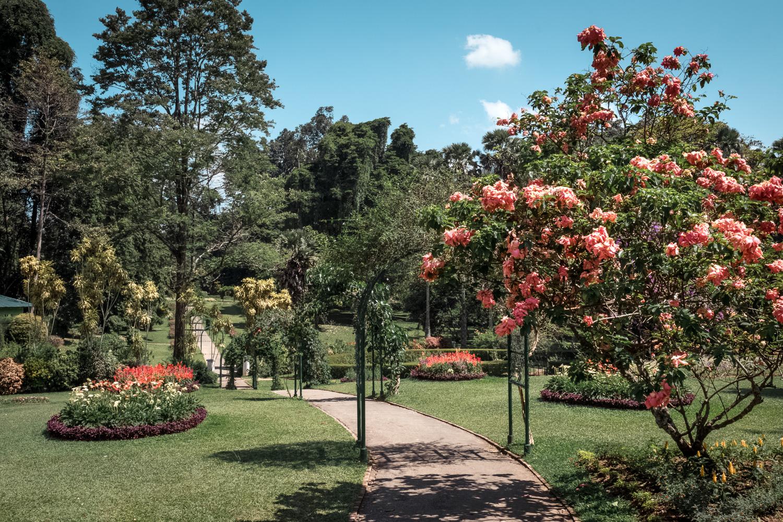 Kandy Peradeniya Botanic Gardens