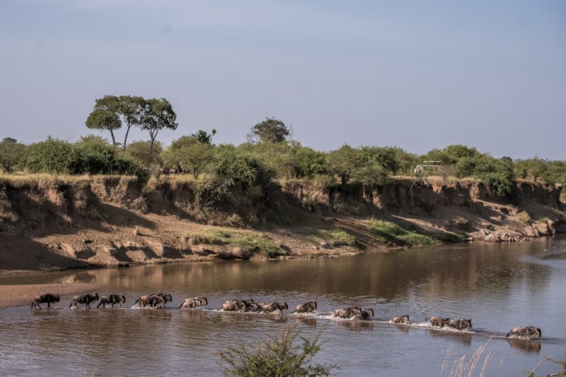 10 DAYS TANZANIA ITINERARY - Mara River crossing
