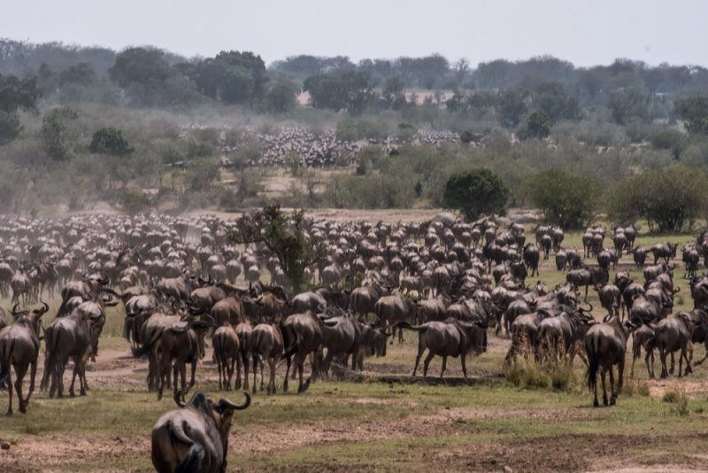 10 DAYS TANZANIA ITINERARY - Great Migration