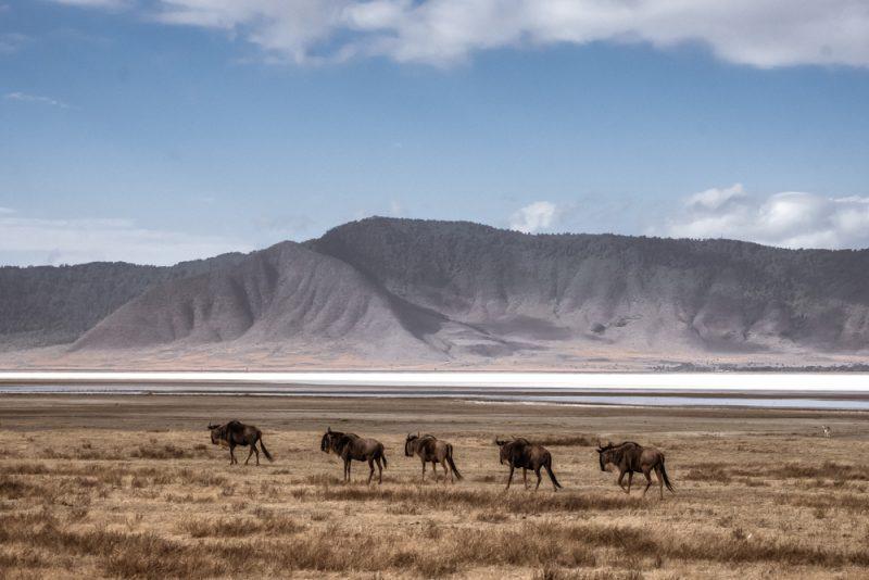 10 DAYS TANZANIA ITINERARY - Ngorongoro Crater Wildebeest
