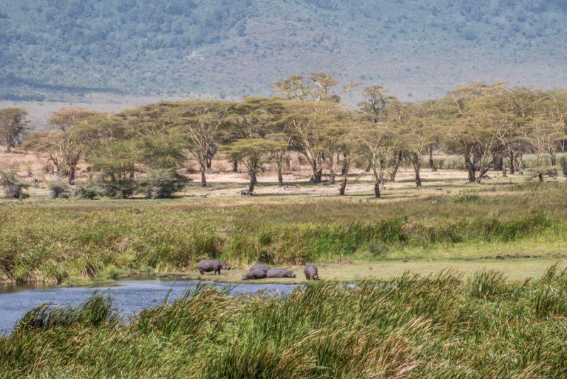 10 DAYS TANZANIA ITINERARY - Ngorongoro Crater Hippo Pound