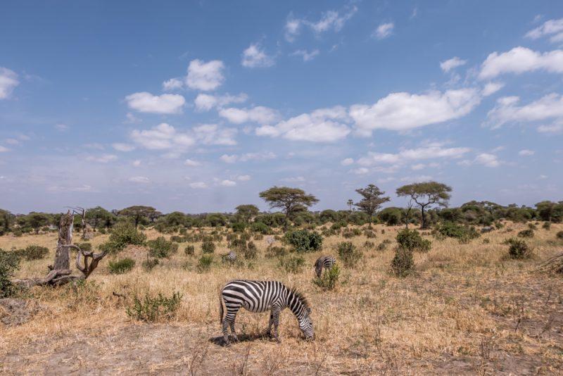 T10 DAYS TANZANIA ITINERARY - Tarangire National Park