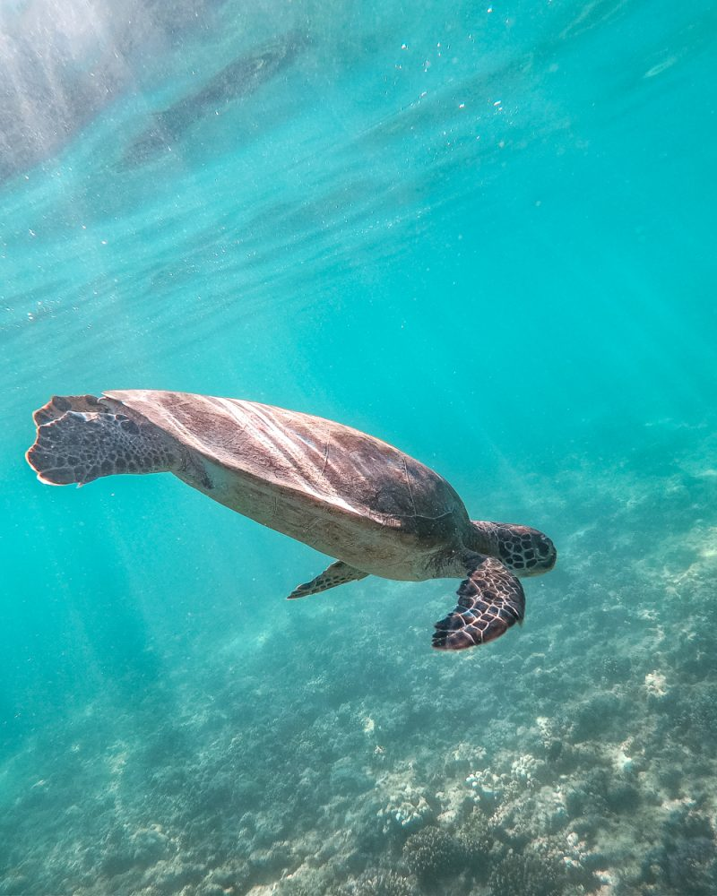 Oman itinerary - Places to visit in Oman - Daymaniyat islands turtles