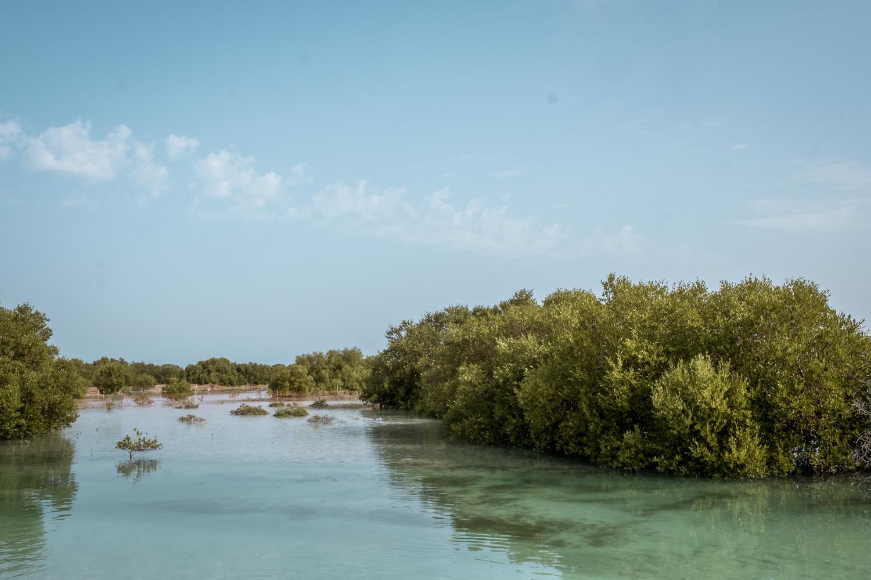 Abu Dhabi holidays Jubail Mangrove
