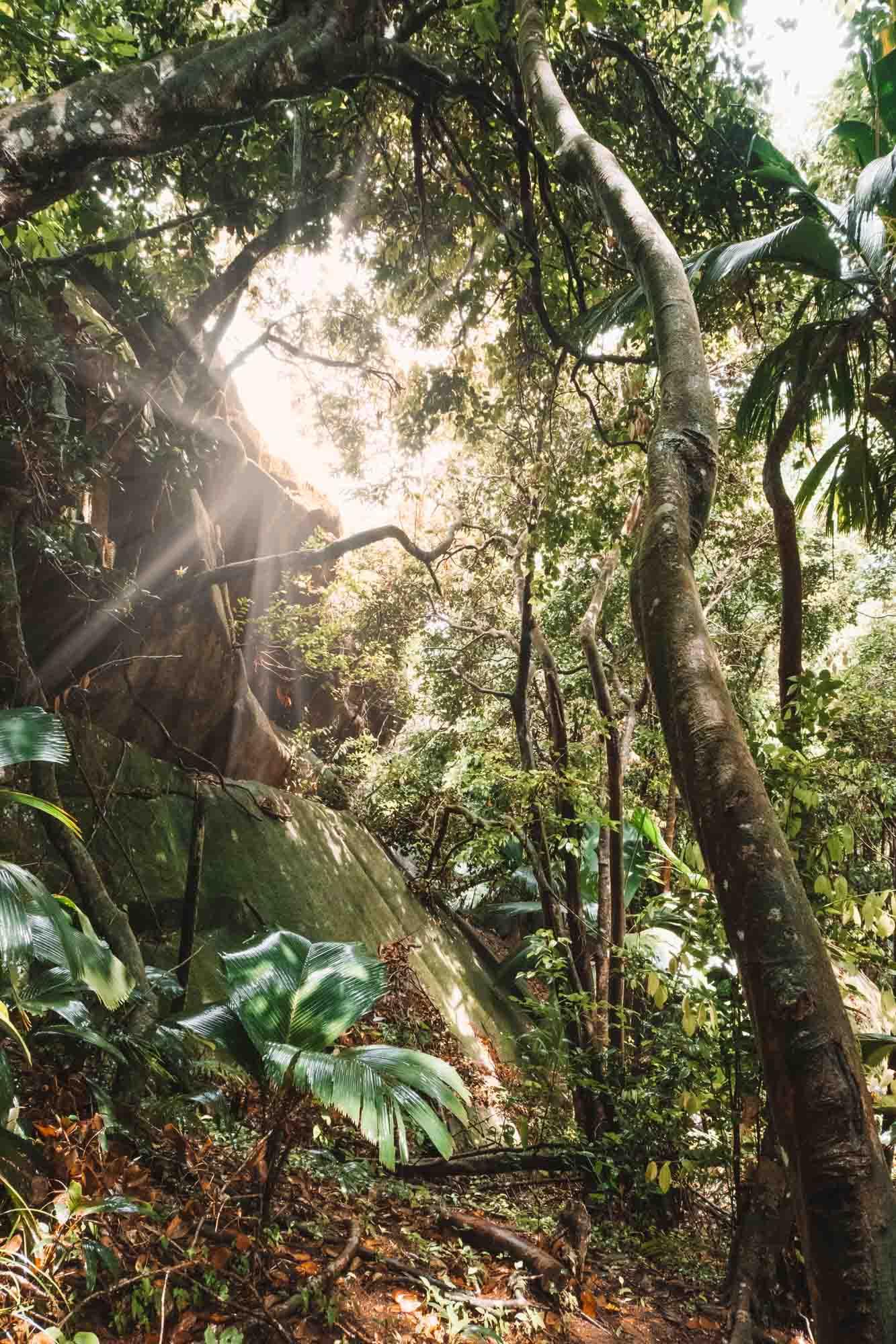 Seychelles Mahe Travel Guide Dans Gallas trail hike
