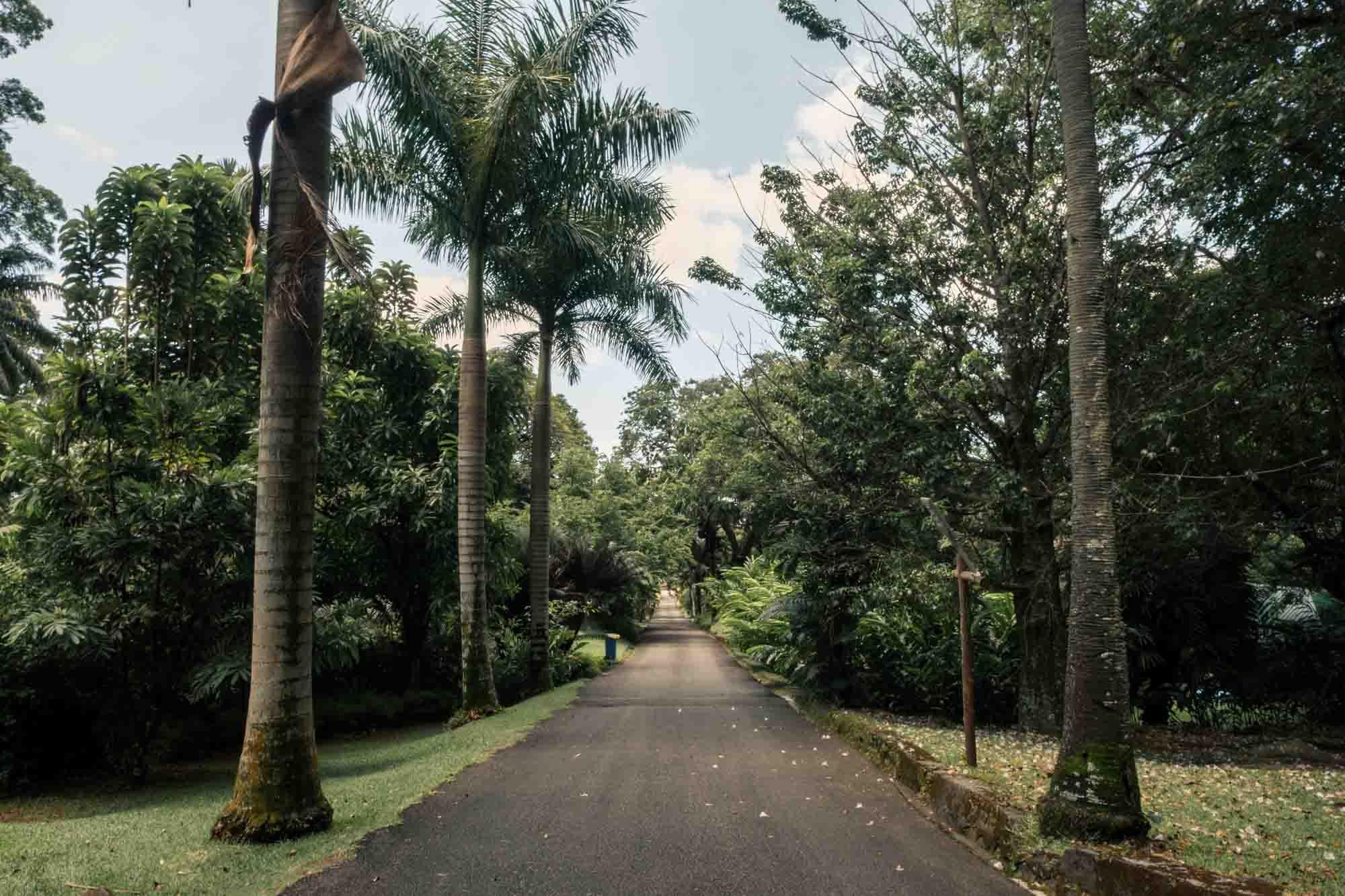 Seychelles Mahe Travel Guide Botanical Garden